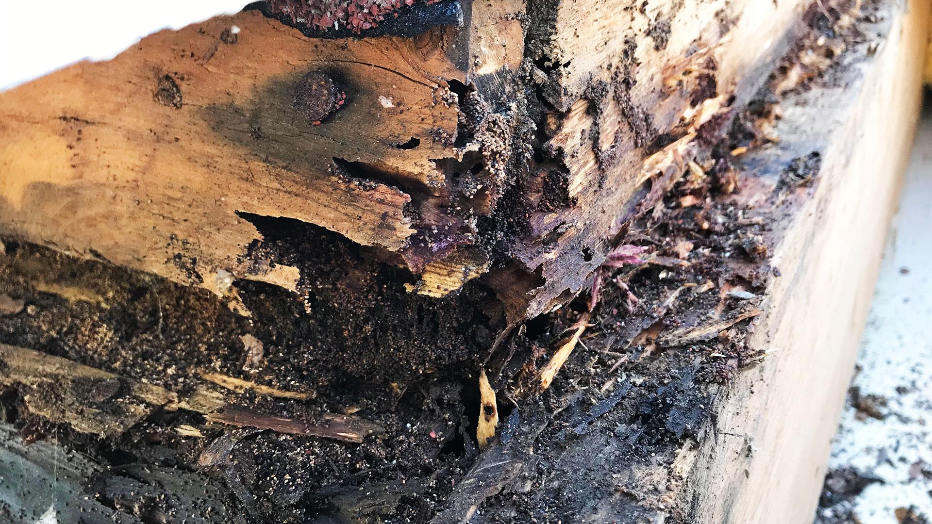 services-termite-control-02